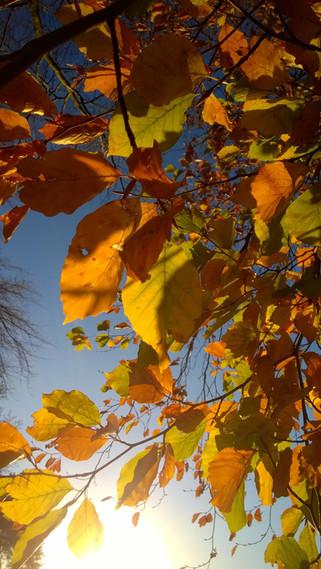 Astrid Blake photo autumn leaves, natural light, colour