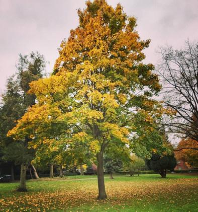 Capturing Autumn Photo Competition 2020