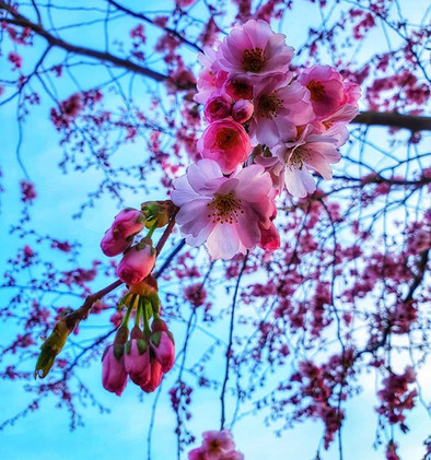 Spring Photo Competition 2021