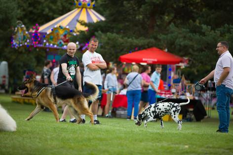 Central Park Dog Show 2019