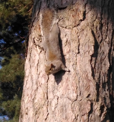 Central Park Squirrel Competition 2020