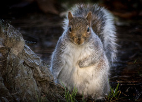 Central Park Squirrel Photo Competition
