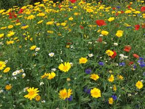 Wildflower Beds