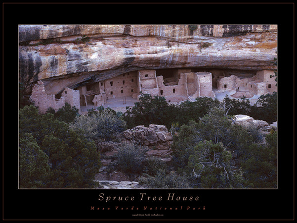 Spruce Tree House Medium