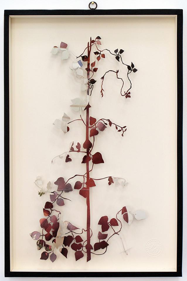 Plant XXIII