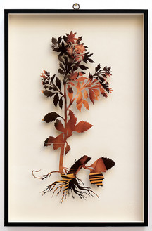 Plant XXXV