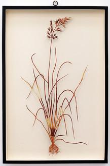 Plant XLII