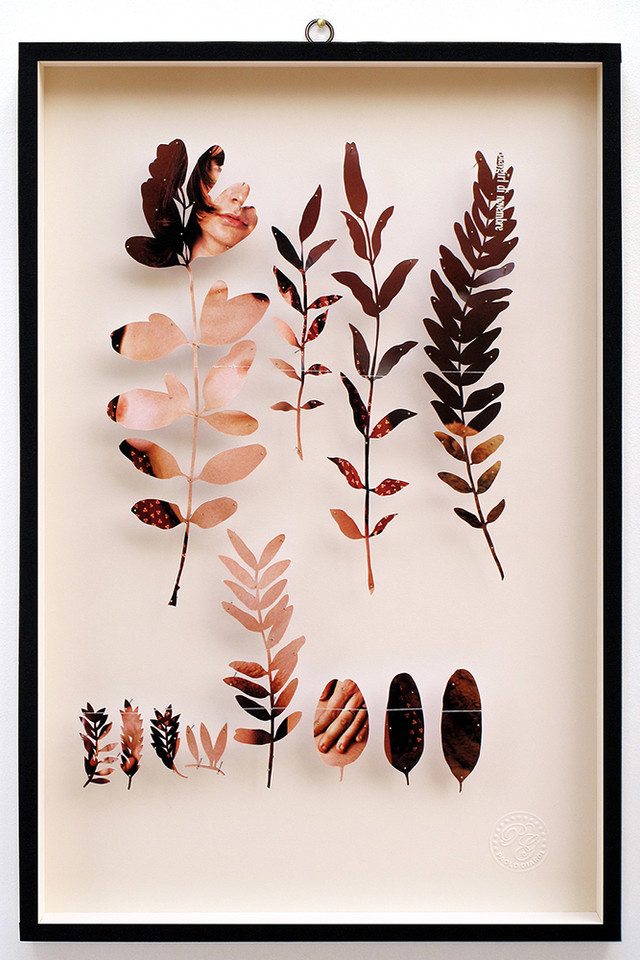 Plant LXXVII