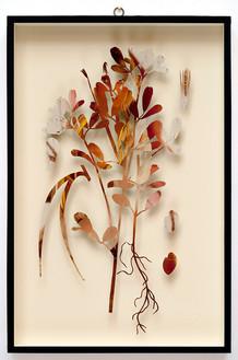 Plant CXI