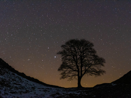 sycamore gap the return