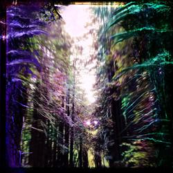 Untitled_Artwork 23 copy