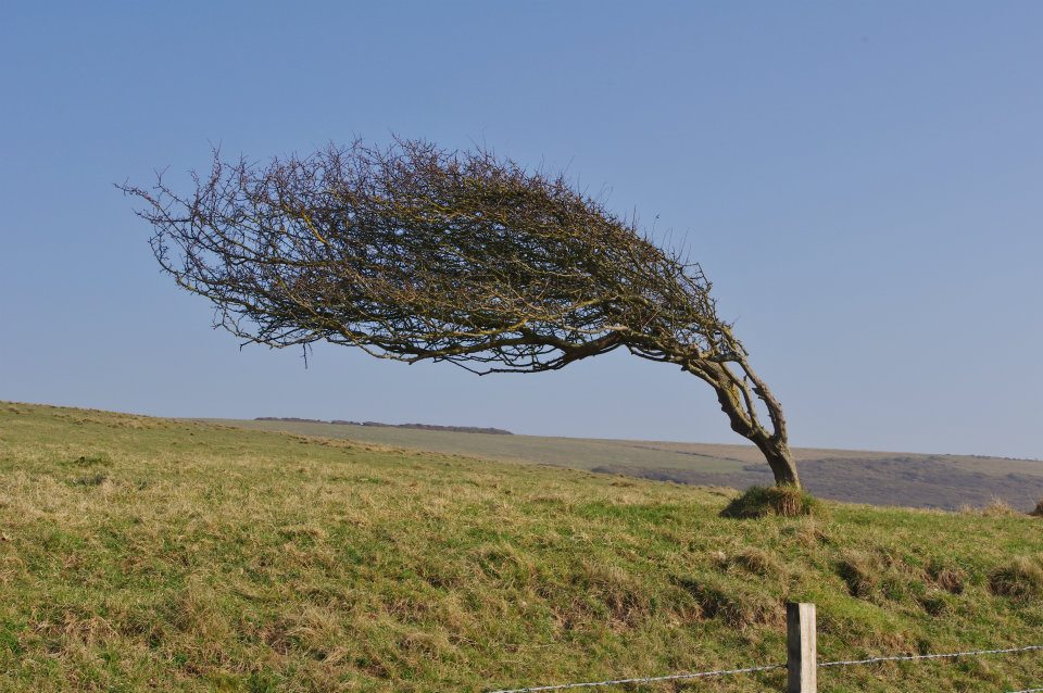 Flickr - Windy Tree