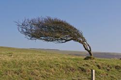 Flickr - Windy Tree