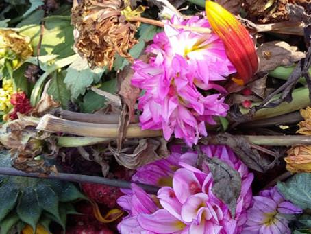 Outdoor Botanical Dye Workshop - 13.10.2019