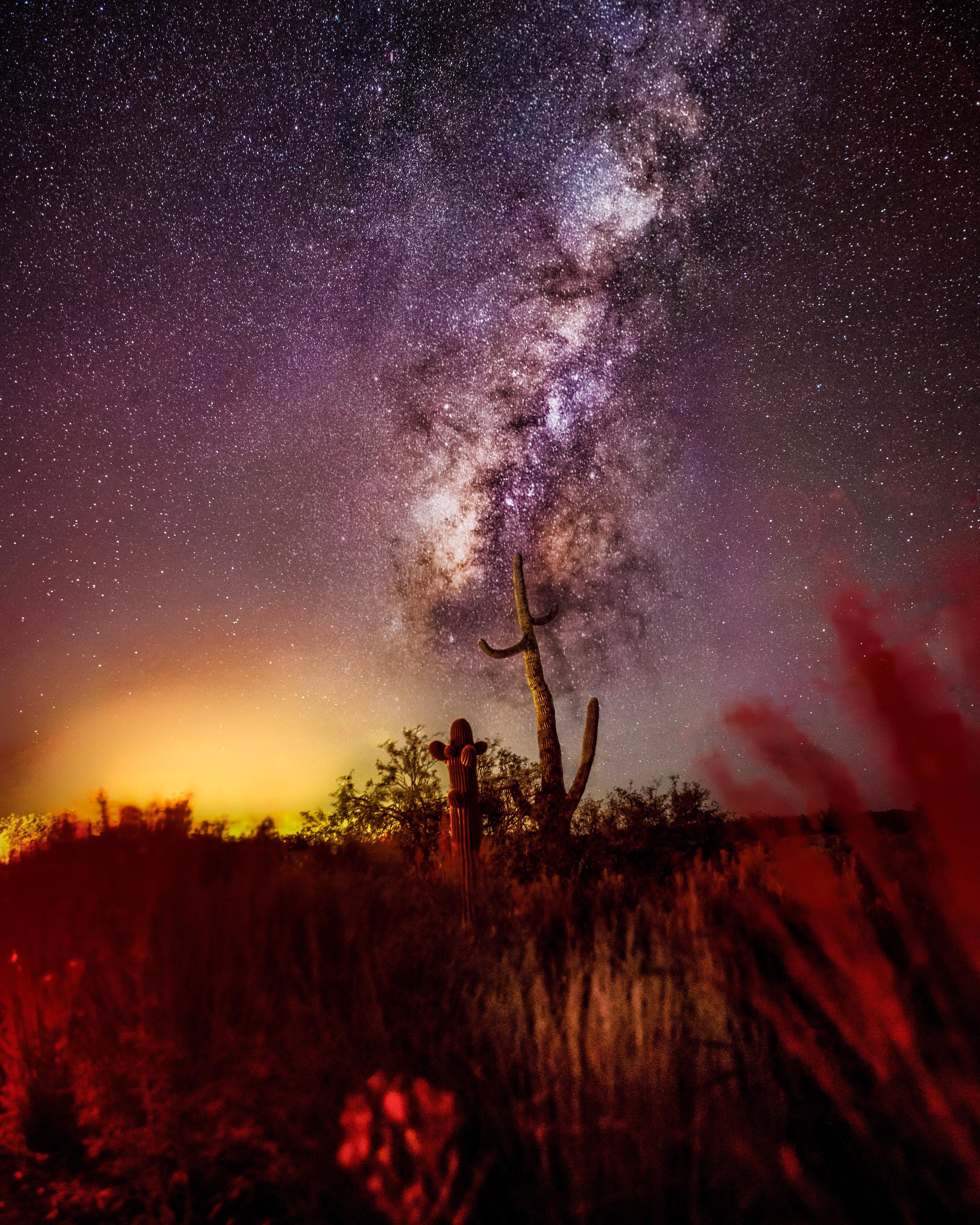 Cactus Milky Way