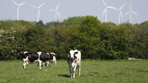 Les champs électromagnétiques sont-ils responsables de la mort de centaines d'animaux?