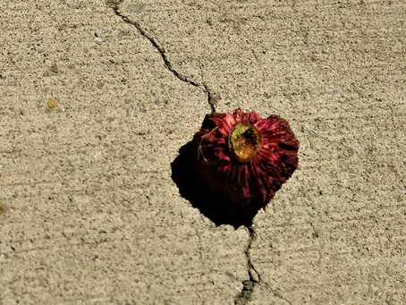 Annah Sidigu: Lonely Onez
