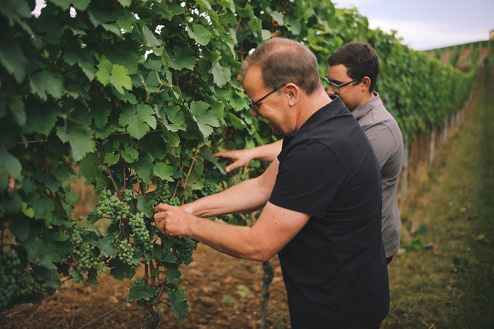 Steffen Meinhard und Matthias Schabler bei der Weinlese