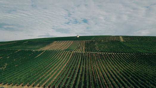 Weinberge Weingut Meinhard