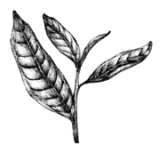 Logo_Blatt_klein.png