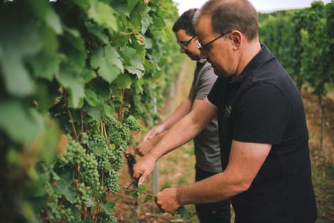 Steffen Meinhard & Matthias Schabler bei der Arbeit im Weinberg