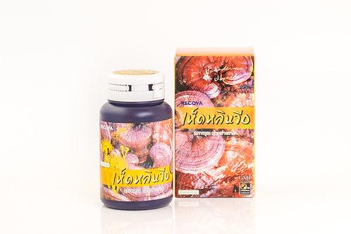 ยาแคปซูลเห็ดหลินจือ/Lingzhi Capsule/灵芝胶囊