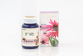 งานวิจัย Echinacea การรักษาธรรมชาติที่จะต่อสู้กับโรคหวัด