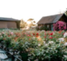 pretty sunrise in beeten_fh.jpg