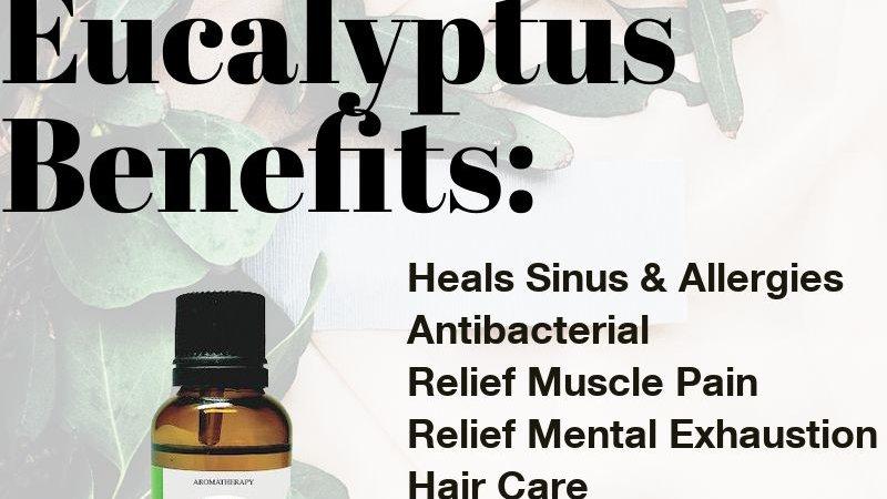 Eucalyptus Essential Oil (30ml)
