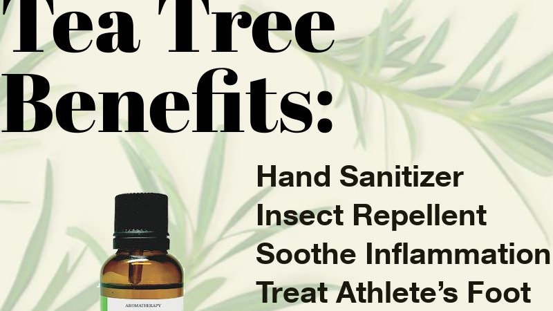 Tea Tree Essential Oil (10ml)
