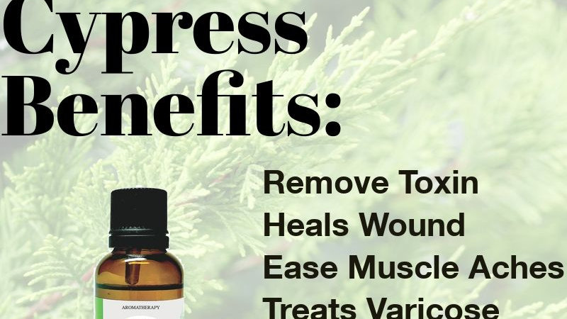 Cypress Essential Oil  (30ml)