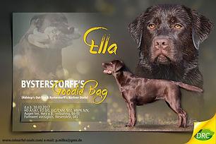 ZZL Ella.jpg
