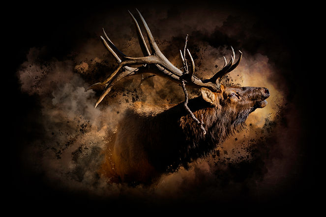 Elk Art 8.jpg