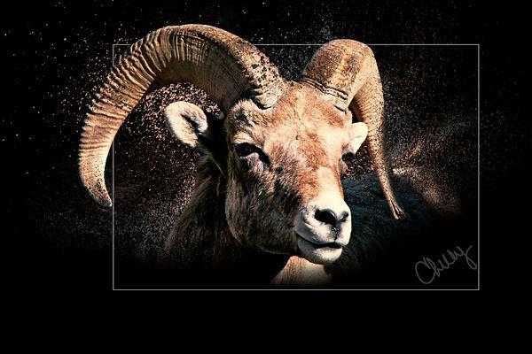 Big Horn Sheep 1.jpg