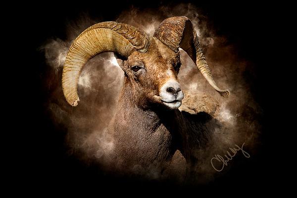 Big Horn Sheep 2_marked.jpg