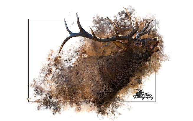 Elk Art 6 300ppi.jpg