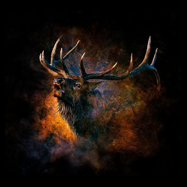 20x20 Metal screaming bull art.jpg