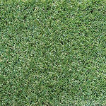 Paspalum-Artificial_Turf.jpg