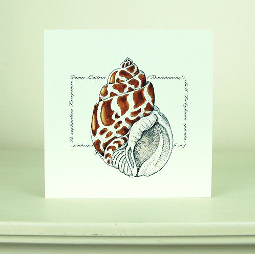 Brown Shell Card