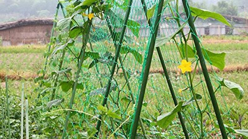 0.9x1.8m/1.8X1.8m/1.8x2.7m/1.8x3.6m Garden Vine Plant Climbing Net /Home Garden