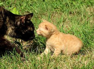 cat-4425870_1920.jpg