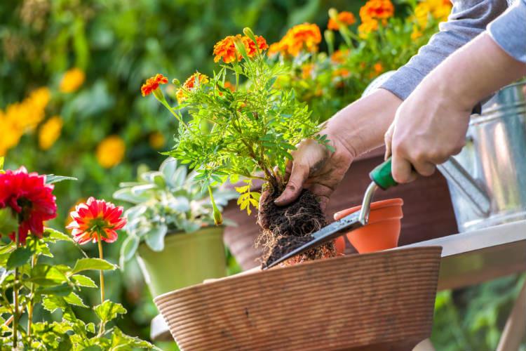Suje suas mãos com a terra do seu jardim