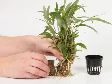 How To Prepare Your New Plants for Your Aquarium