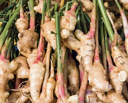 portion-Ginger-ginger-root-stem-1.jpg