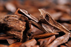 sandalwood-could-it-heal-your-wounds_gra