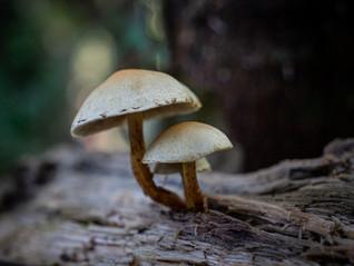 Tiny shrooms