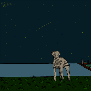 dog watching shooting stars on the hill