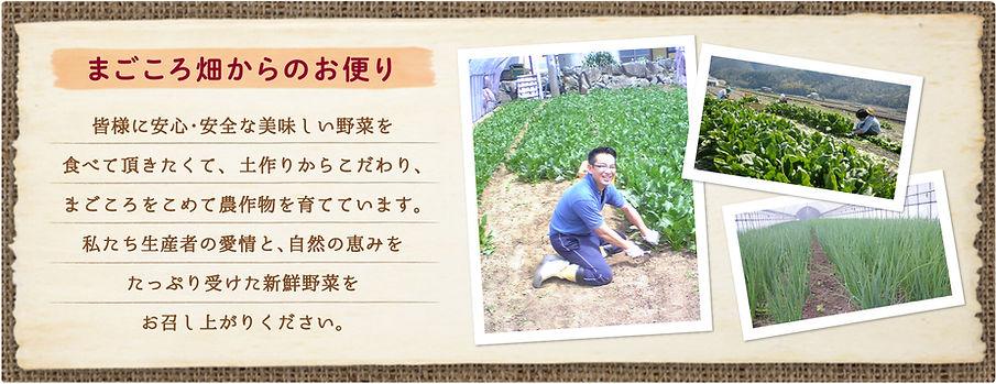 安全、安心で健康な新鮮野菜を育ててます。