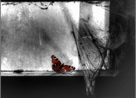 Schmetterling_colourkey fc.jpg