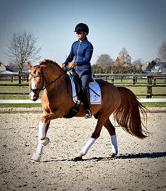 Dallmayr K, étalon DRP, poney de dressage, France